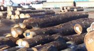 Importation de bois exotique pour plages de piscine